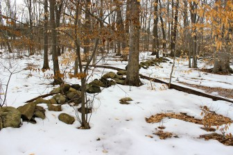 One of the last remaining stretches of the Perambulation Line exists in the woods east of New Canaan High School. What was once Stamford was on the left of this stone wall; on the right was Norwalk. (Terry Dinan photo)