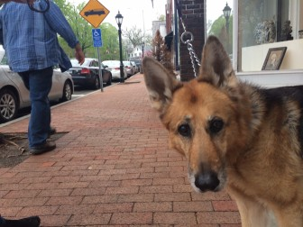 Phoebe Feiner of New Canaan and Manhattan. Here she is on Main Street. Credit: Michael Dinan
