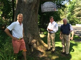 New Canaan Public Tree Board members Chris Schipper, Tom Cronin and Richard Bergmann stand near a notable white oak on Route 106. Board members missing: Tonya Gwynn and Brad Johnson. Credit: Michael Dinan
