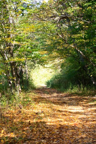 A footpath in the woods of Waveny Park in New Canaan. Credit: Darcy Pennoyer Smith