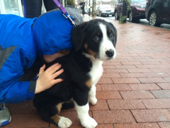 Josh Dixon, 5, and Molly Dixon, 11 weeks, in downtown New Canaan on Dec. 23, 2014. Credit: Michael Dinan