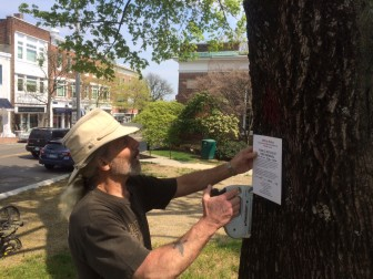 Tree Warden Bruce Pauley re-posts the Norway maple tree out front of Town Hall on May 5, 2015. Pauley had posted the tree for removal last month, but opted to pull down the post after a resident complained. After, dozens of residents expressed support for his initial decision, so now it's being reposted. It isn't clear whether the opposing resident or residents will push for a hearing on it. They have 10 days to do so. Credit: Michael Dinan