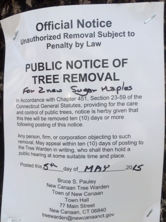 The posting on the Norway maple in front of Town Hall, on May 5, 2015. Credit: Michael Dinan