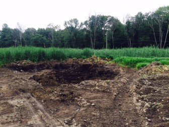 """A look toward the southeast corner of the """"cornfields"""" area at Waveny Park on July 9, 2015. Credit: Michael Dinan"""