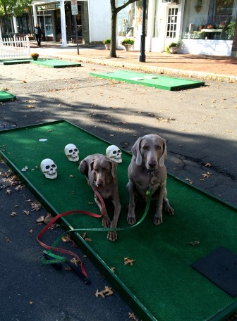 Oei's dogs enjoy mini golf at the Pop Up Park downtown.