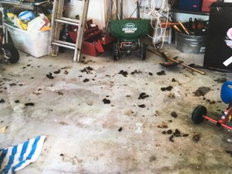 A photo shows the interior of the garage at the home in question, where a puppy is said to have been seen consistently among his own feces and urine. The garage has been cleaned and the puppy reported healthy, closing a dog neglect investigation, according to the Animal Control section of the New Canaan Police Department.