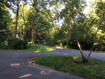 The Waveny Park Conservancy is planning to install a trail that will run up the hill on the left. Credit: Michael Dinan
