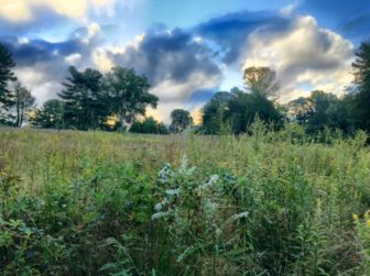 Irwin Park on the morning of Sept. 16, 2016. Looking eastward up the meadow toward the house. Credit: Susan Bergen