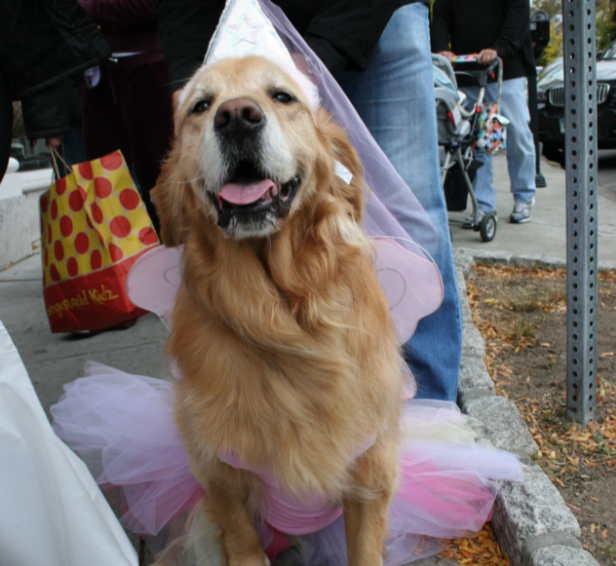 Pet Pantry Warehouse Proudly Hosts Howl And Prowl An Annual Event Created In 2008 On Sunday October 23rd Between The Hours Of 1pm 4pm Downtown