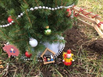 a close up of the littlest christmas tree in new canaan credit