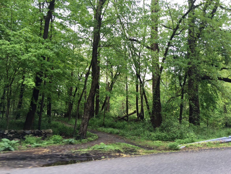 You're Promoting Bad Behavior': Parks Officials Push Back on